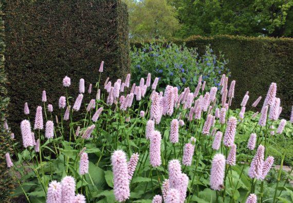 Healing Garden Picture