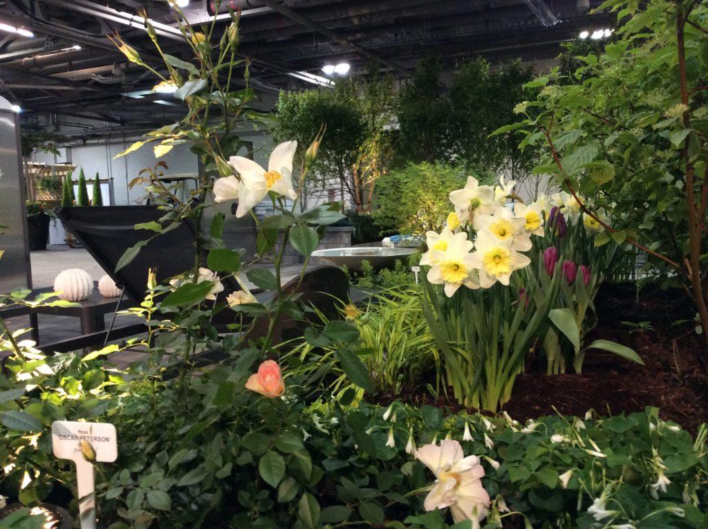 Planting Stingray Garden